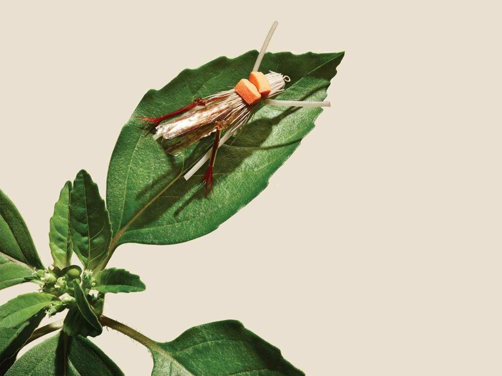 fly fishing bug on a leaf