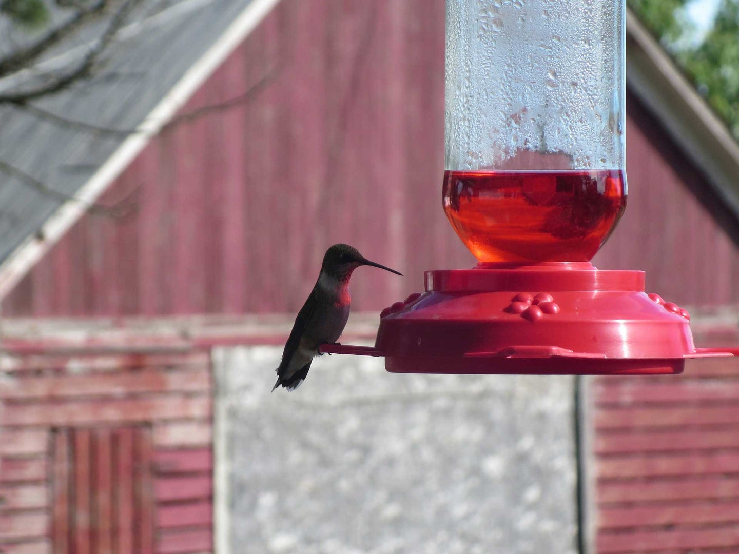 Three Things To Know Before You Buy Hummingbird Feed (Nectar)