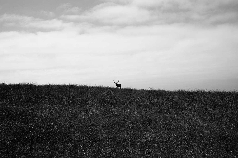 elk in a photo