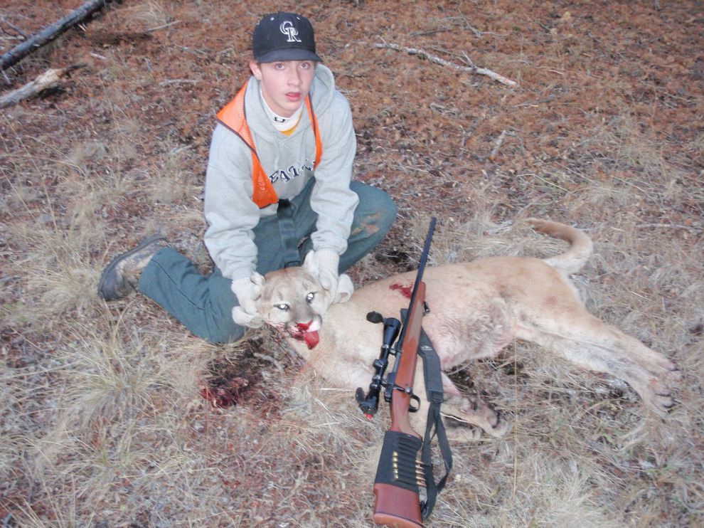 A mountain lion that pursued a 15 year-old hunter.