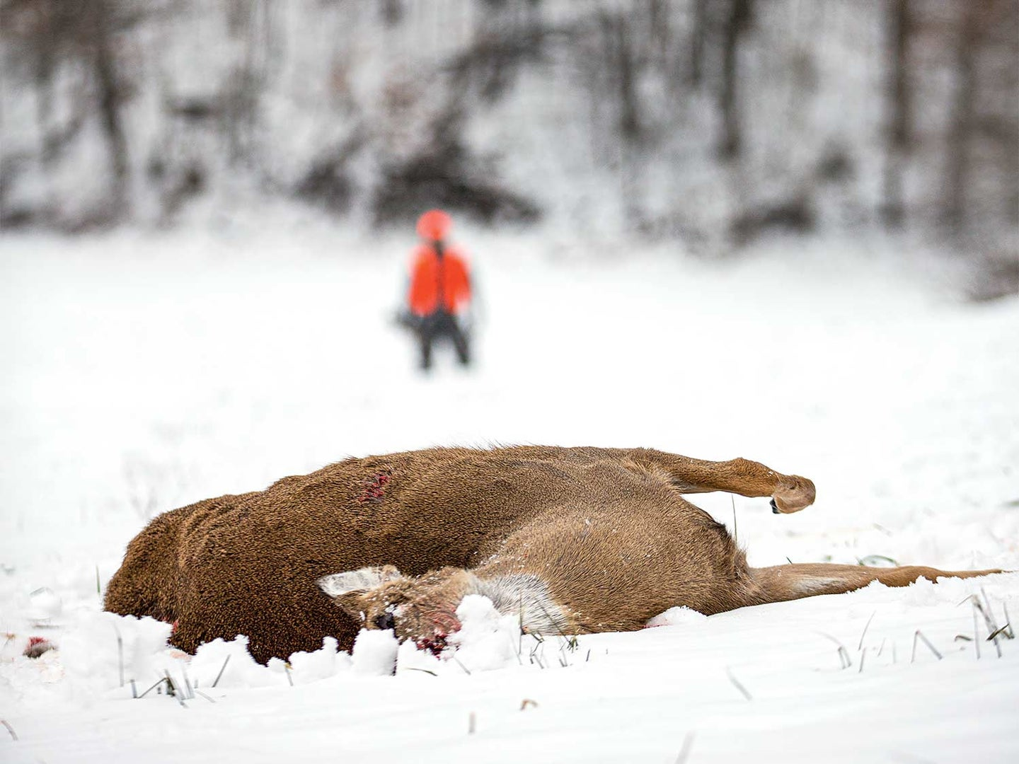 Why I Don't Take Long Shots When Deer Hunting
