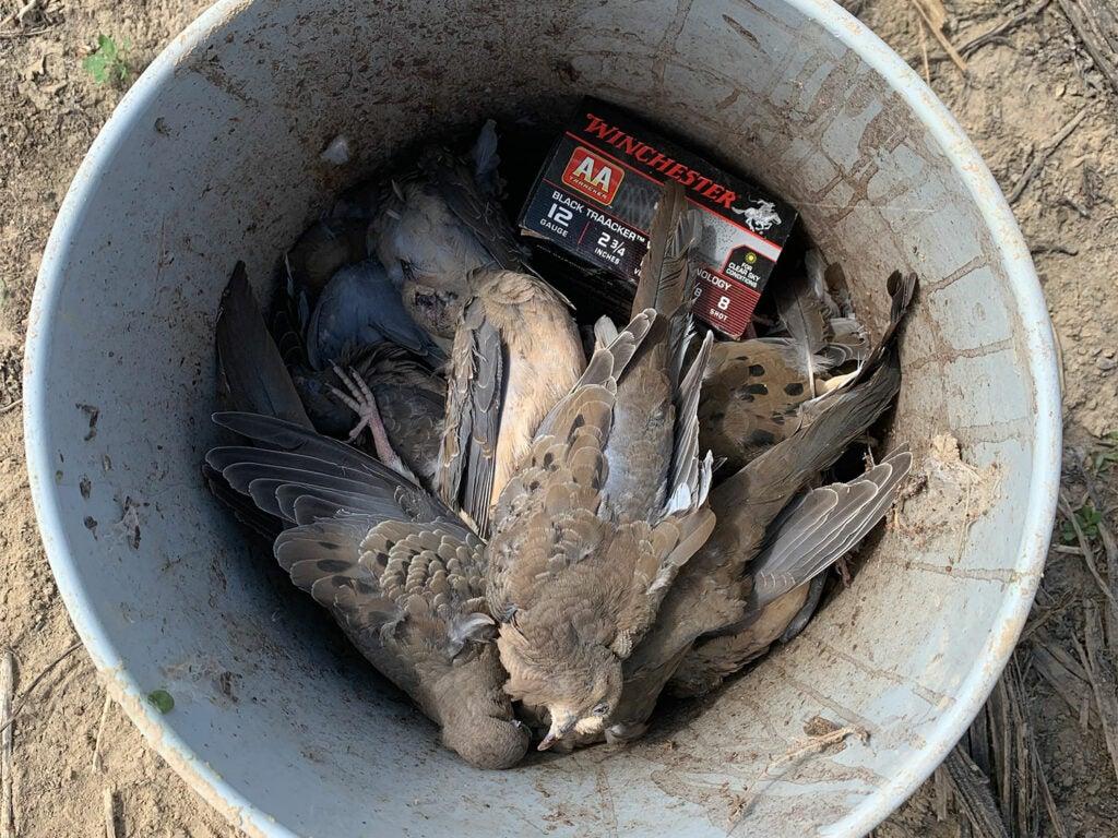 doves in a 5-gallon bucket