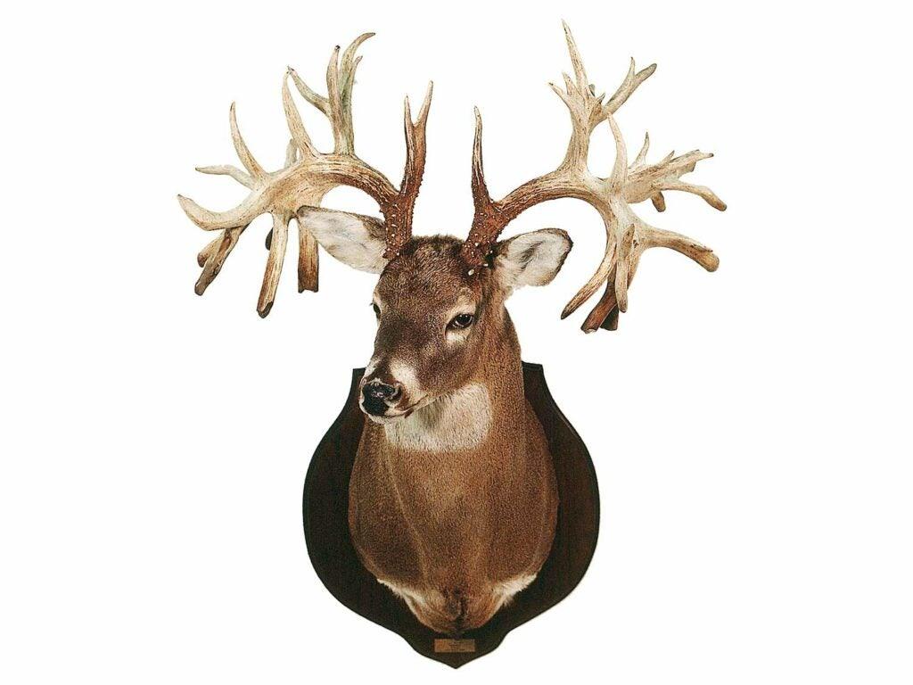 The Missouri Monarch antler rack trophy