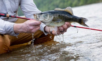 An Overnight Float for Flint River Shoal Bass