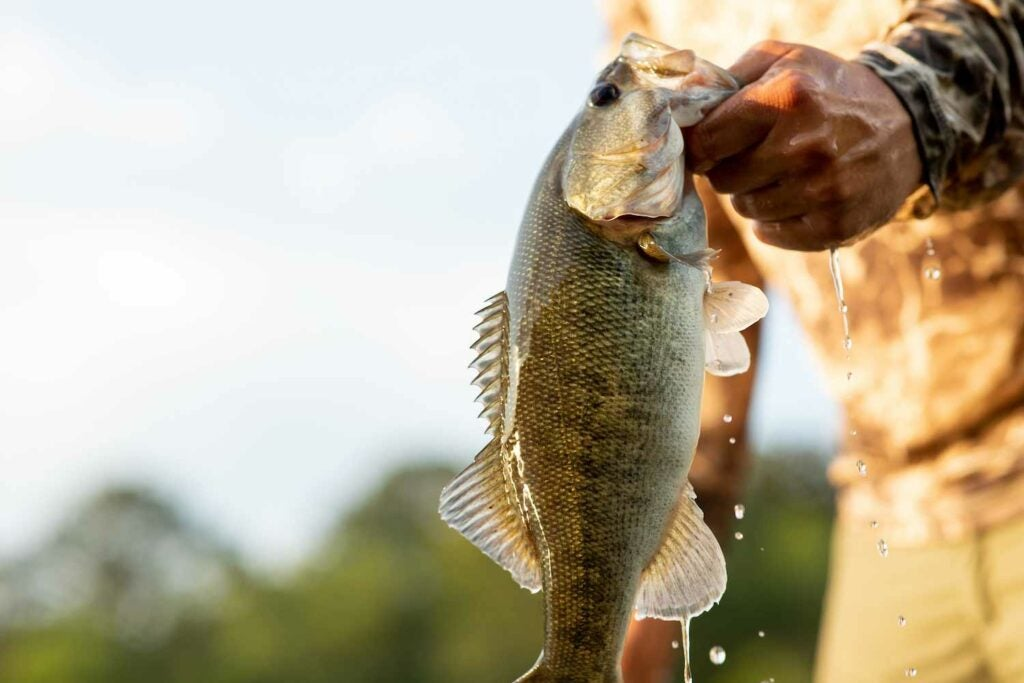 Cody Wade holds up a shoal bass caught in Georgia's Flint River.