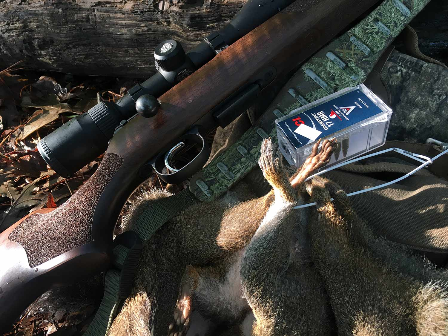The Best Magnum Rimfire Rifles and Ammo for Squirrel Hunting