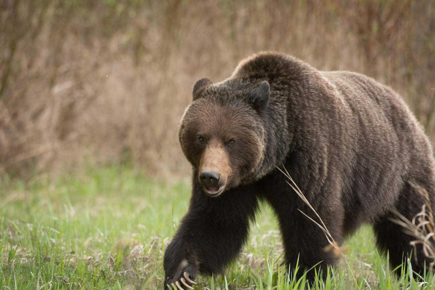 The 7 Best Brown Bear and Grizzly Cartridges