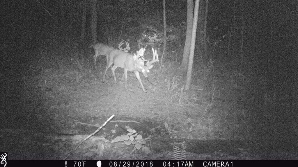 black and white image of bucks caught on trail camera