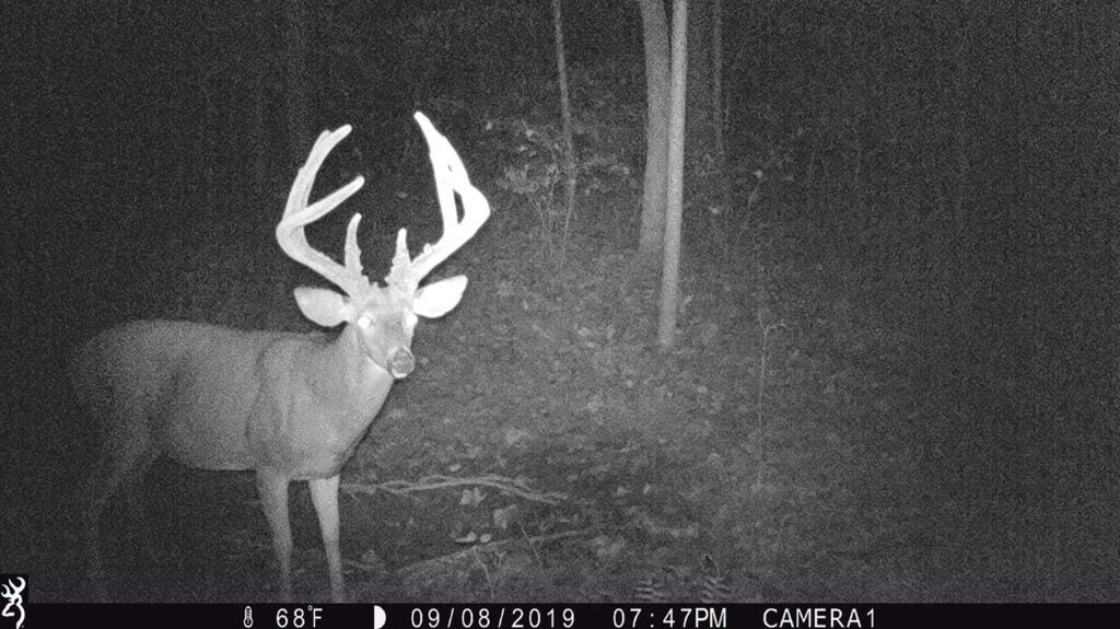 black and white image of a buck caught on trail cam