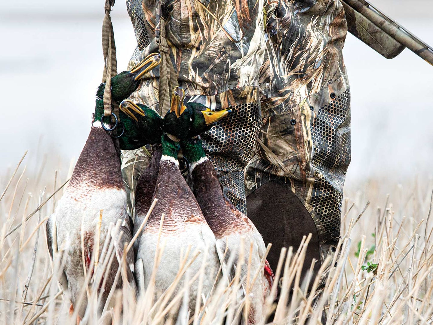 5 Tips for DIY Duck Hunting in the Prairie Pothole Region