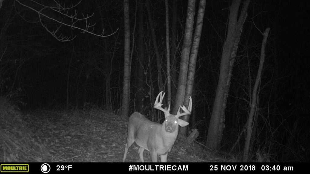 a black and white trail camera photo of a buck at night