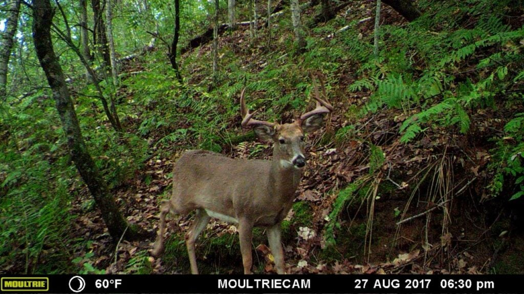 trail cam photo of a giant wisconsin buck in the woods