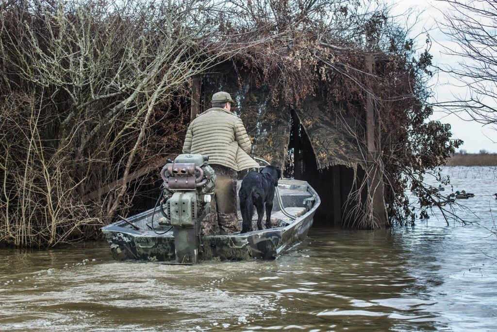 hunter guiding boat into a duck blind