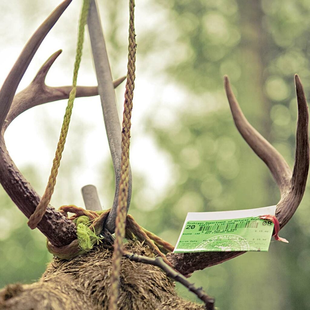 whitetail buck strung up in the woods