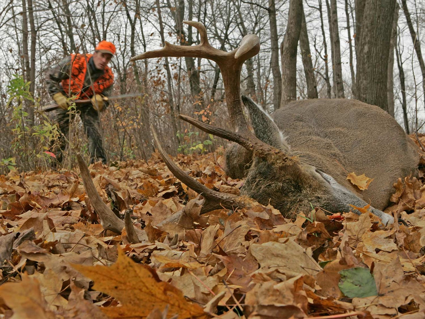 Hunter Shoots Whitetail. Whitetail Gets Up and Kills Hunter