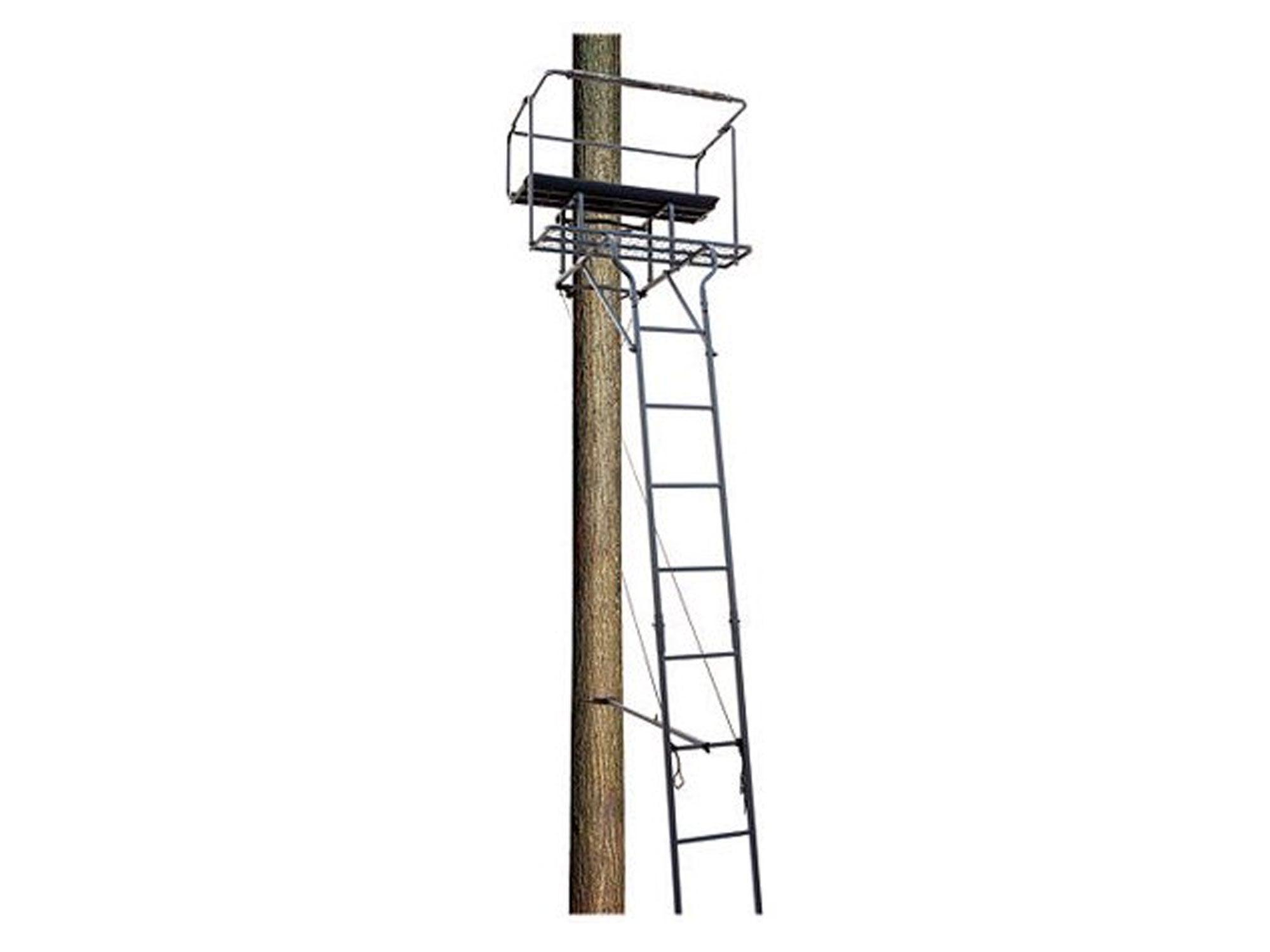 Doe watching ladder