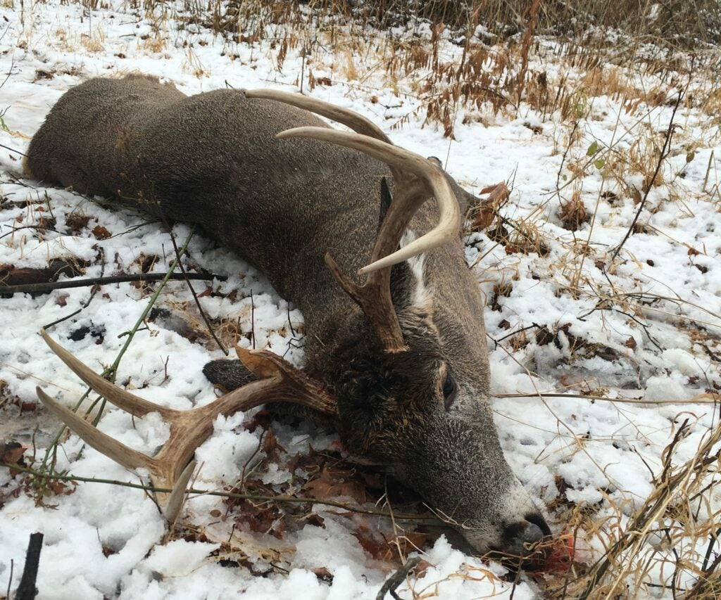 dead whitetail buck in the snow