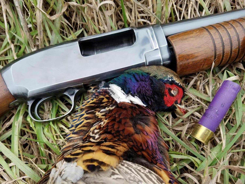 Is the 16 Gauge Shotgun Still Dying?