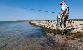 Atlantic States Marine Fisheries Commission Accepts Striped Bass Slot Limit for 2020 Season