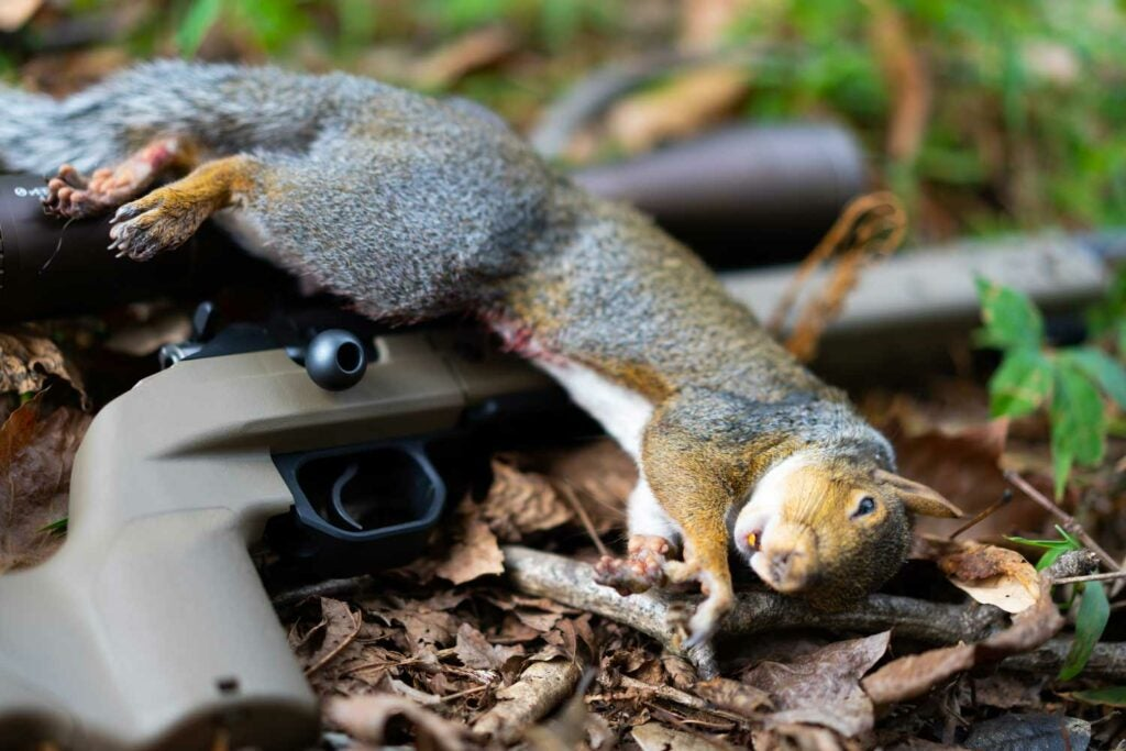 squirrel and a hunting rifle