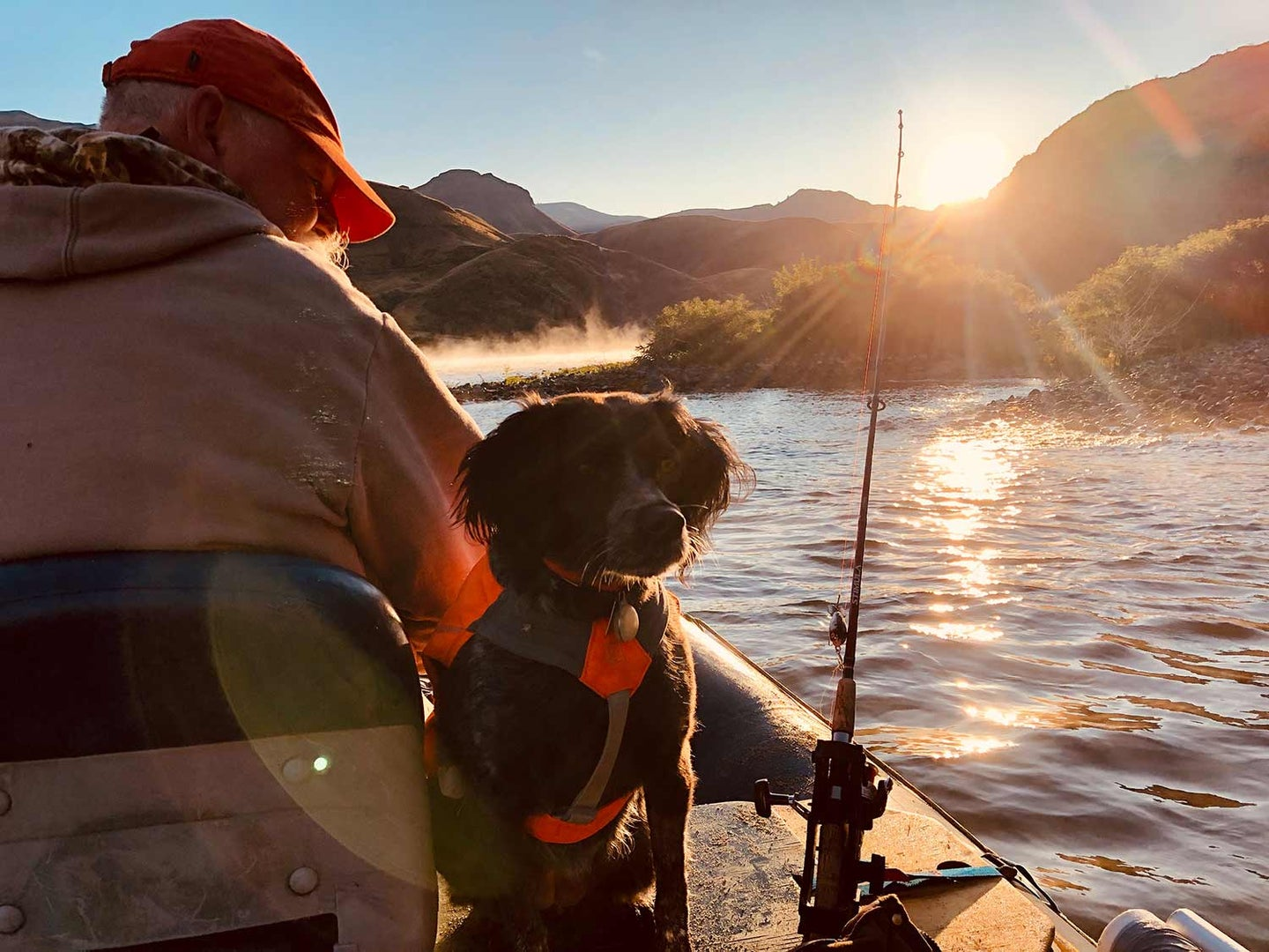 a hunting dog on a fishing boat