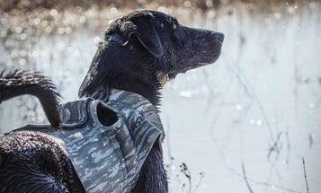 New Skills Make a Better Hunting Dog