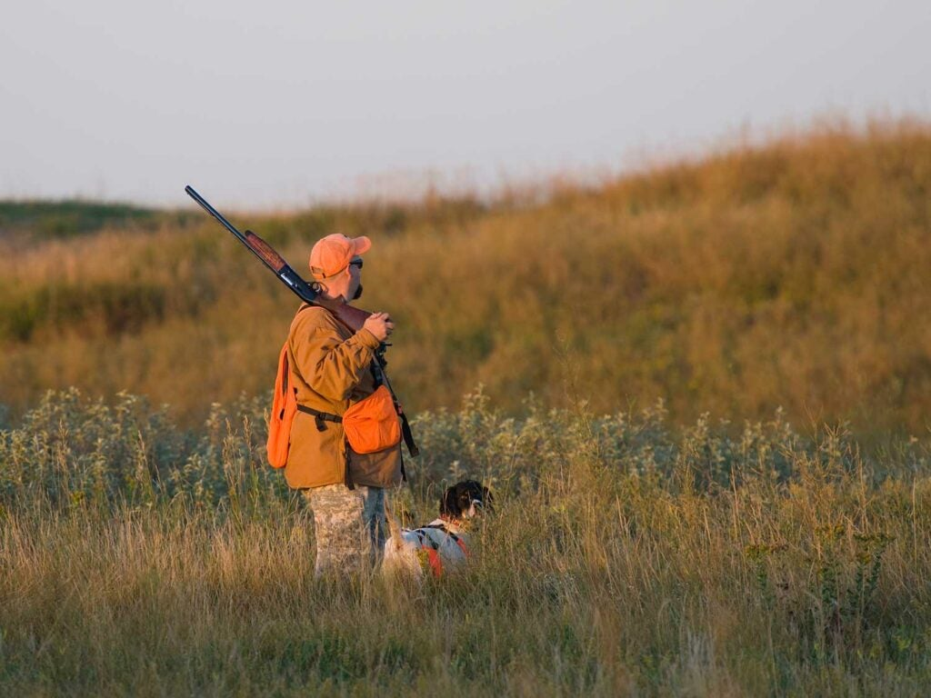 Hunter and a dog in a pheasant field.