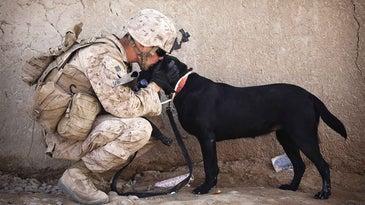 Soldier kissing black dog.