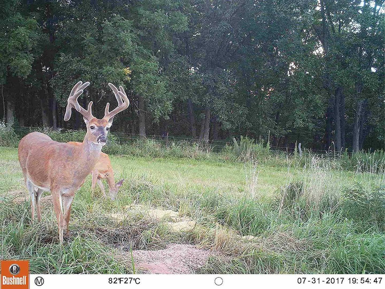 Bushnell deer camera shot image view
