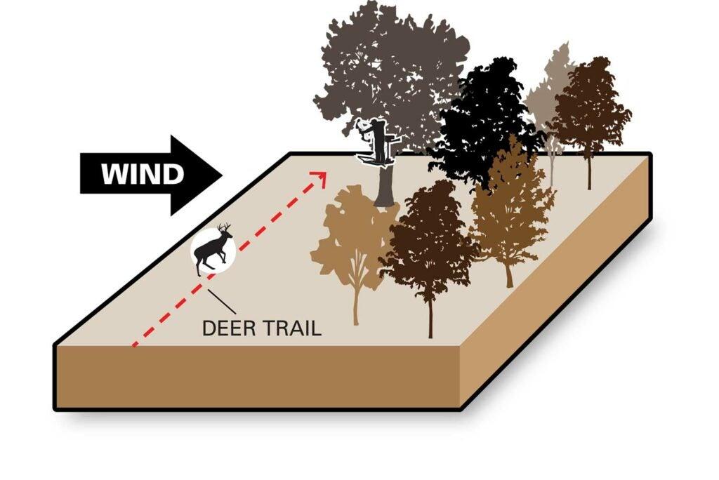 illustration of wind on a deer trail.