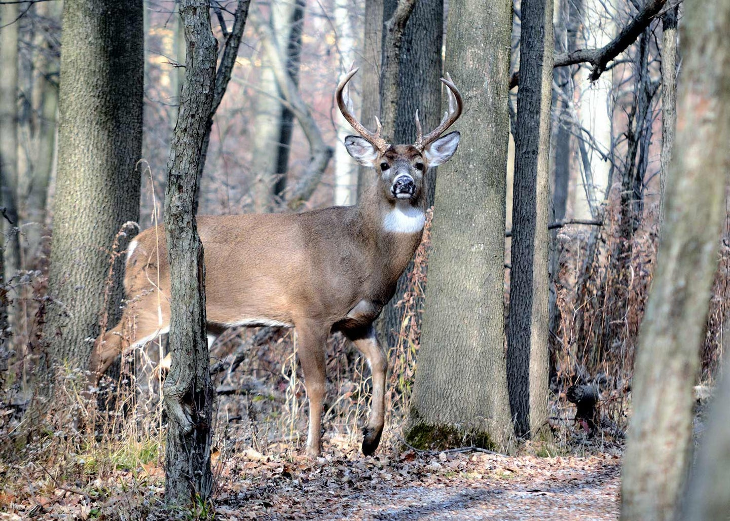 A whitetail deer will trust his nose above all else.