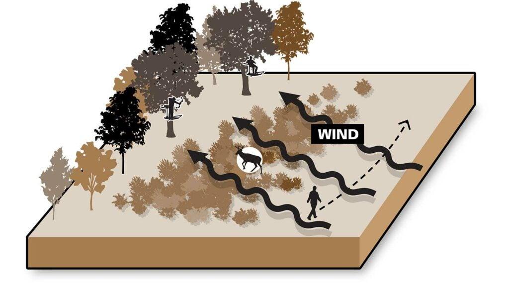 wind bumps illustration driving deer.
