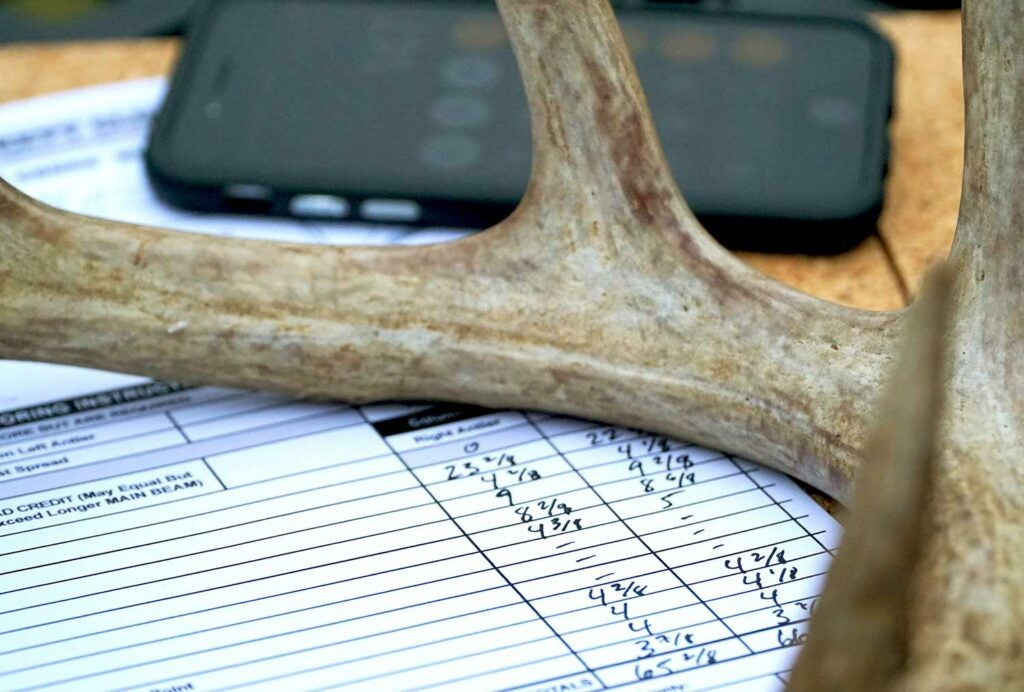 a deer antler on a measuring score sheet