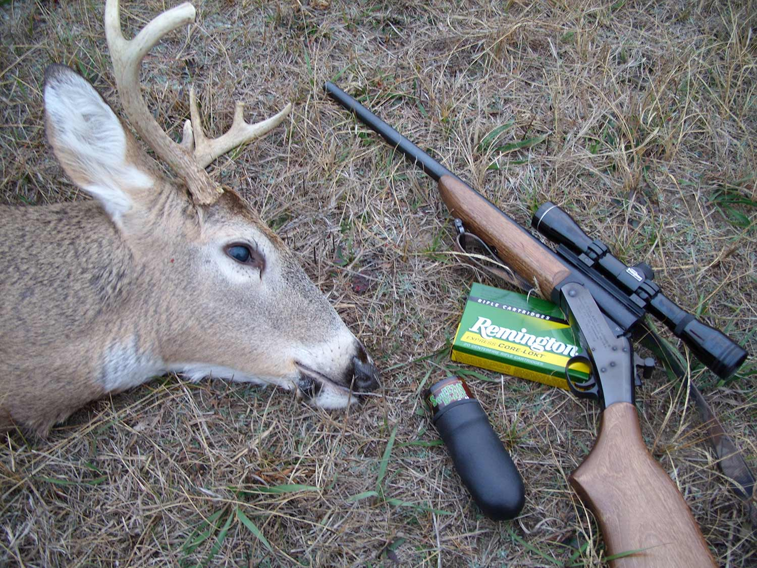 a deer next to a hunting rifle and ammo.