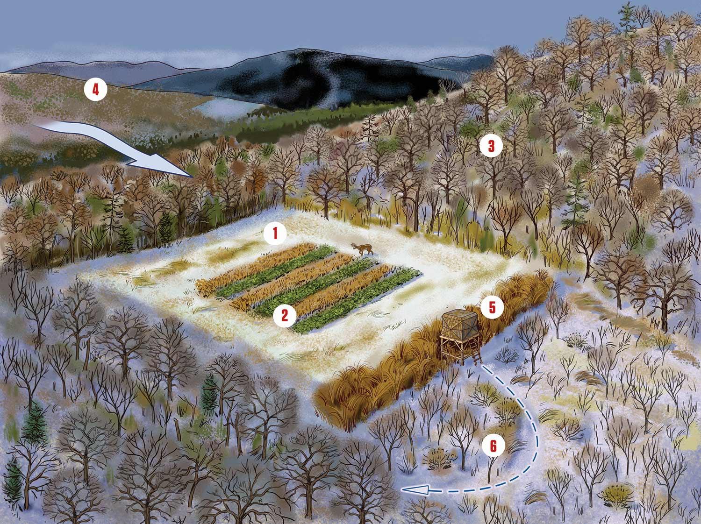 illustration of a deer hunting food plot