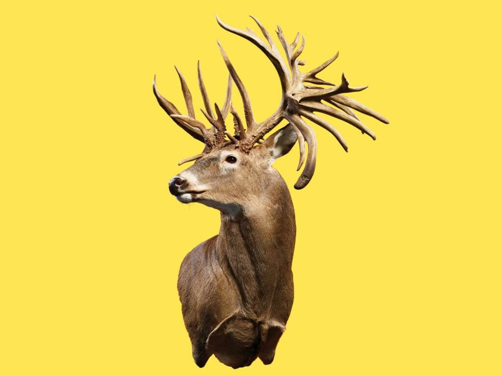 A world-record buck trophy on a yellow background.