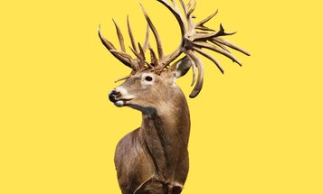 The Story Behind the World-Record Whitetail Deer