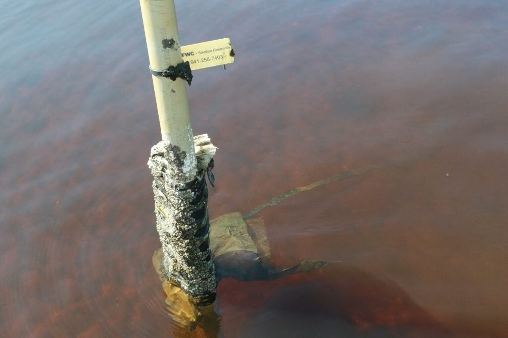 Listening stations placed throughout known sawfish habitat helps FWRI biologists locate tagged fish.