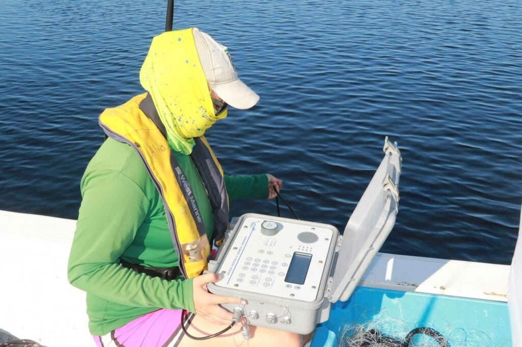 """Alia Court uses an ultrasonic telemetry tracking receiver, known as a """"Hydrophone"""" to listen for tagged sawfish."""