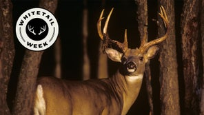 Call In More Whitetail Bucks with These Expert Tips