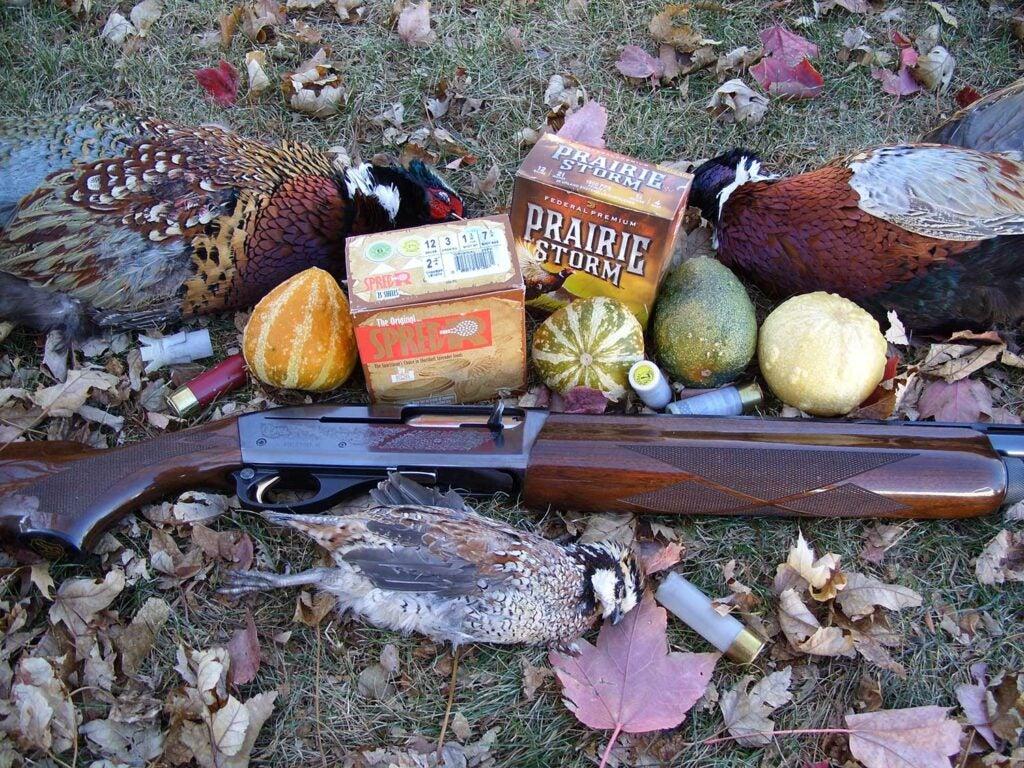 pheasant and quail hunting ammo.