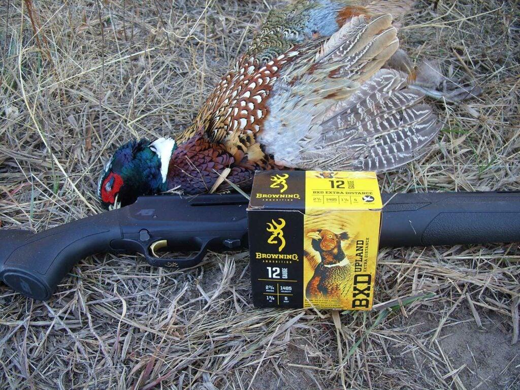 Hunting ammo beside a late-season pheasant.