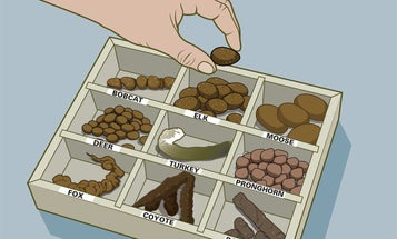 The Hunter's Guide to  Animal Poop