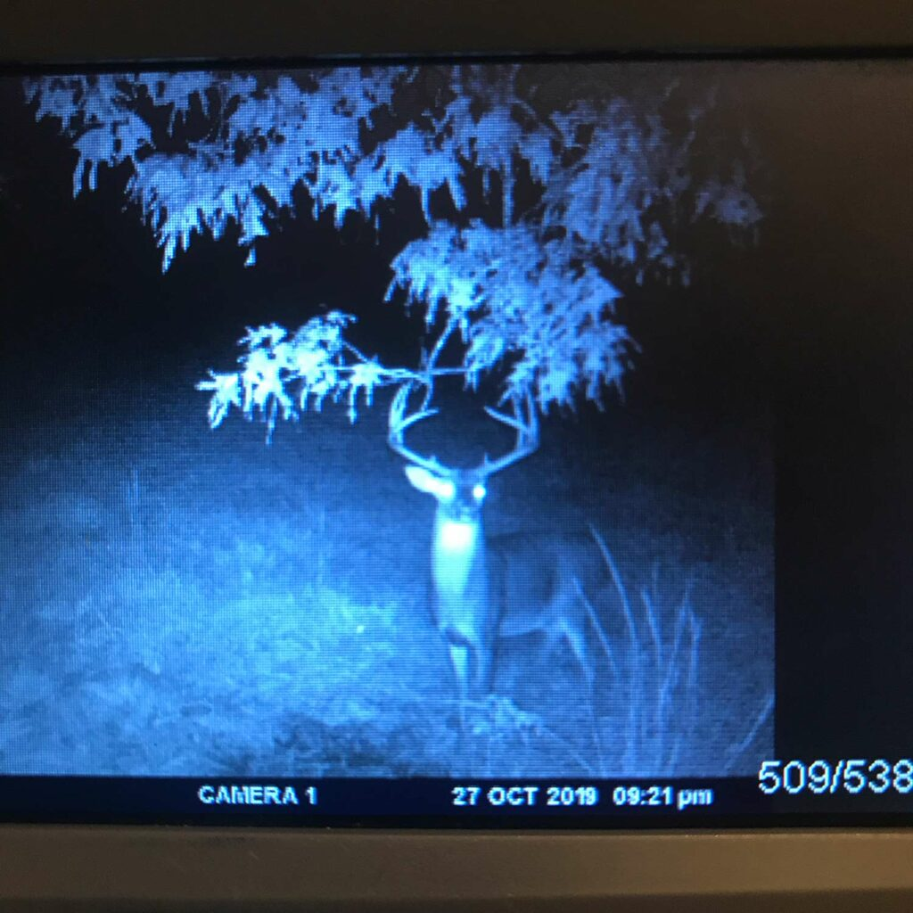 Trail cam photo of a large whitetail buck.