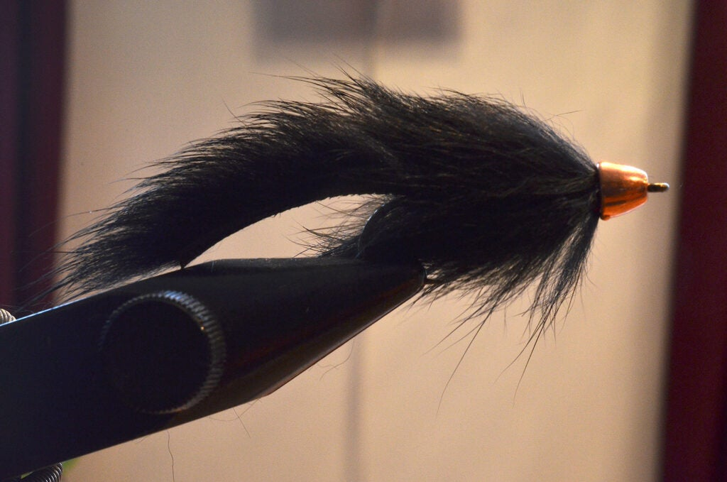 The Pine Squirrel Leech
