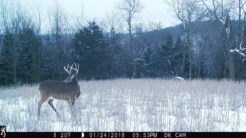 Trail cam image of deer in snow
