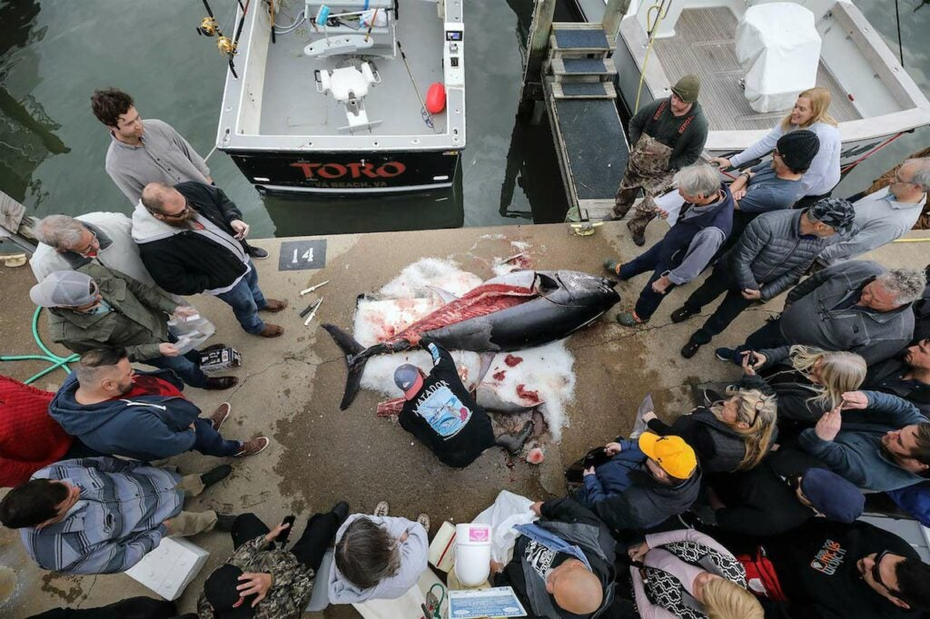 Crowd surrounding a giant bluefin tuna.