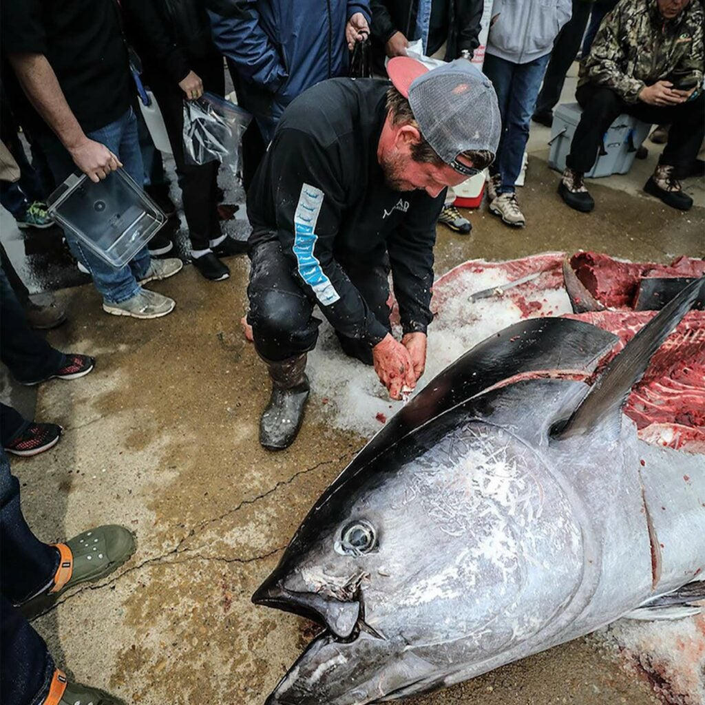 Hiles makes short work of cutting up the record-breaking tuna as onlookers watch.