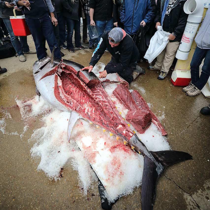 Man carving a bluefin tuna.