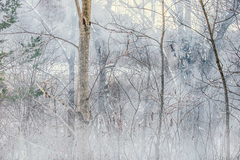 A grove of trees into a wintery haze.